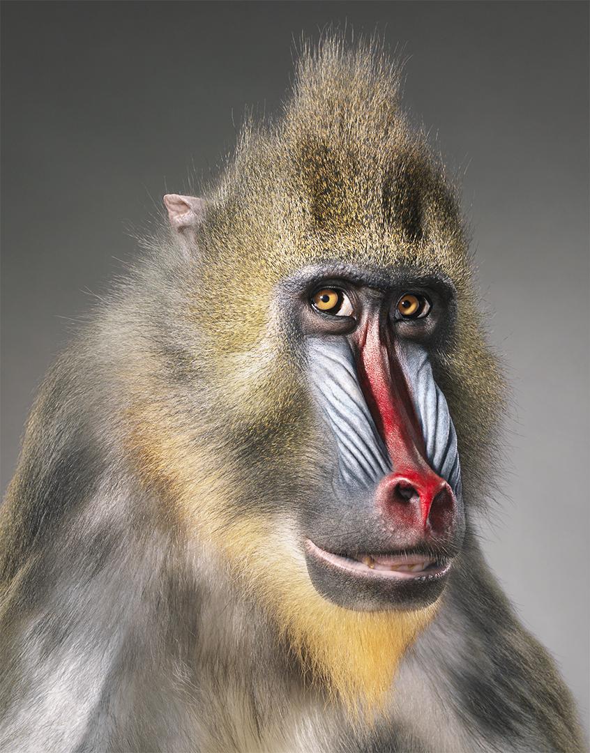 10 fotos de animales en extinción como nunca los habías