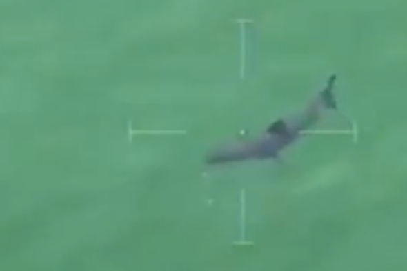 Great white shark spotted at Jaws film location