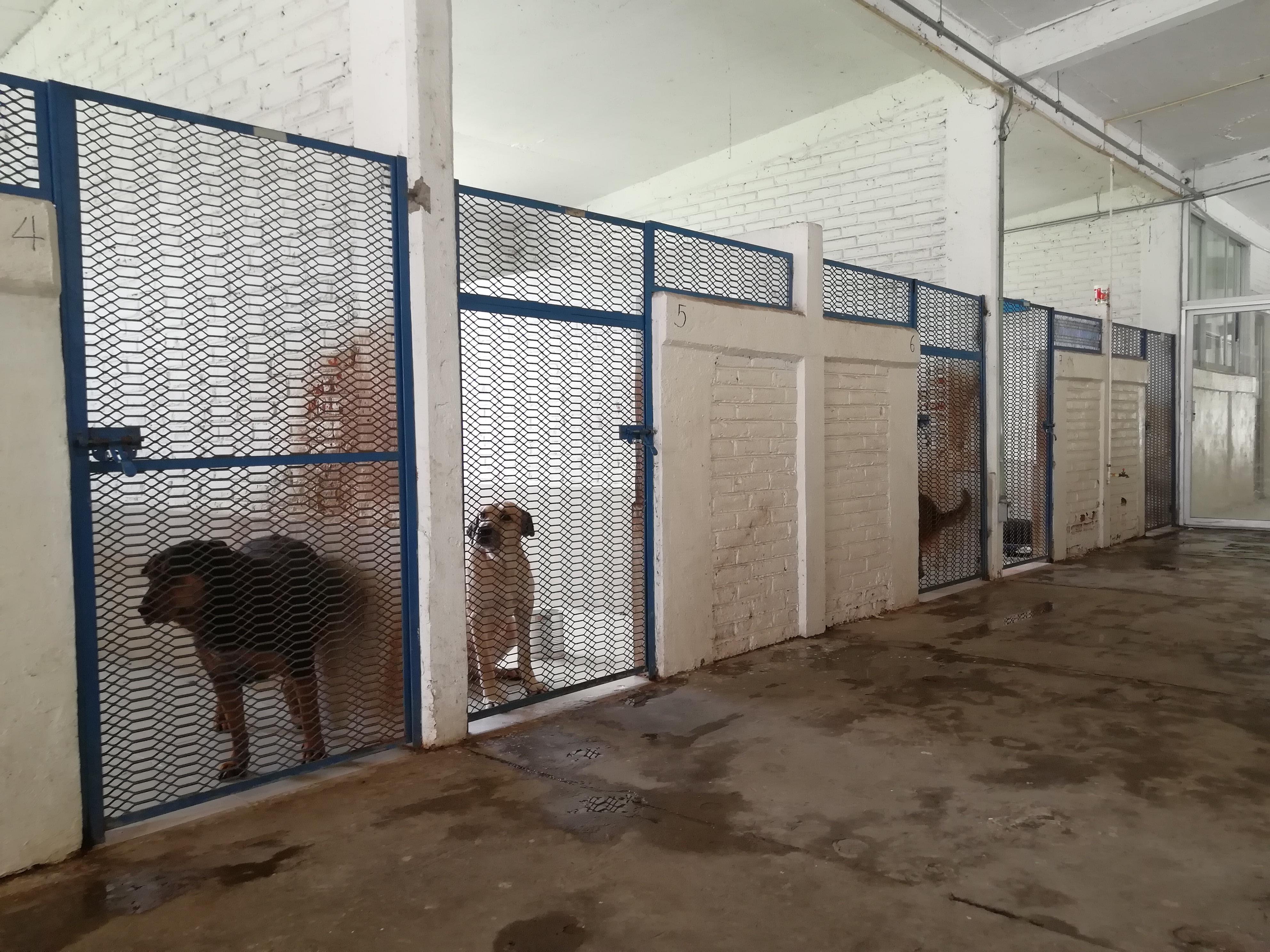 El interior de la perrera que tiene la Brigada Animal de la policía de la Ciudad de