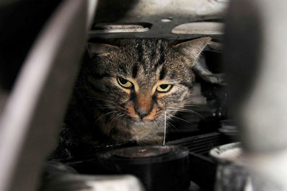 Cat trapped in Turkish car engine