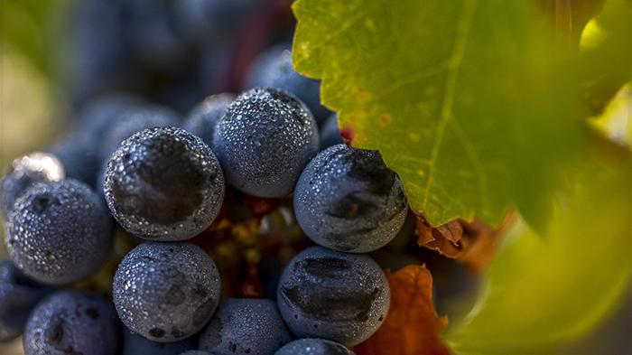 Le TOP 25 des grands vins de Bordeaux