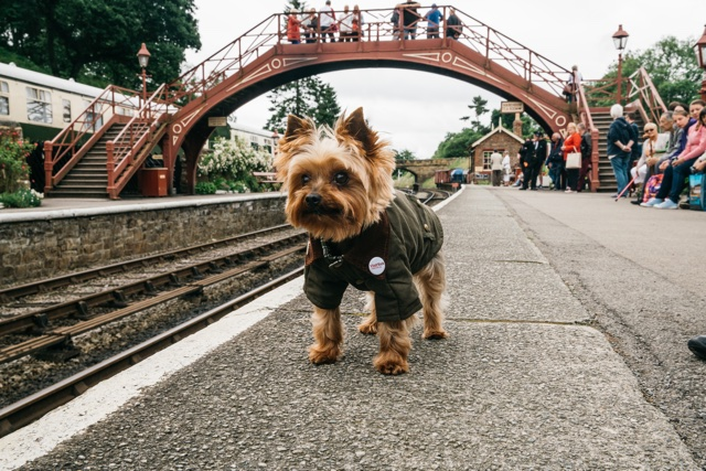'Yorkie': Introducing the world's first canine travel show presenter