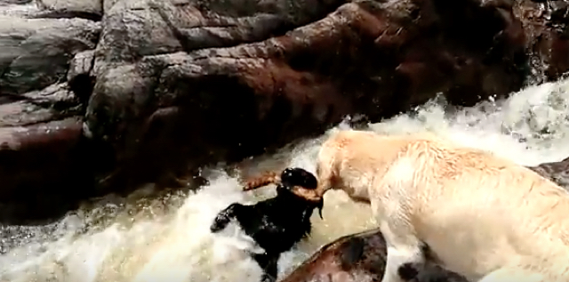 Dog saves friend from river rapids in Argentina