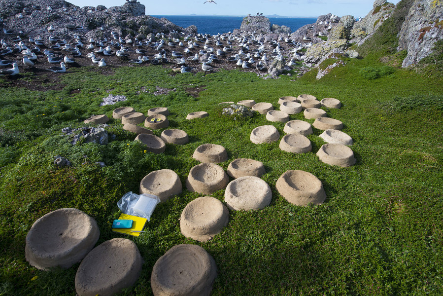 The nests were airlifted to Albatross