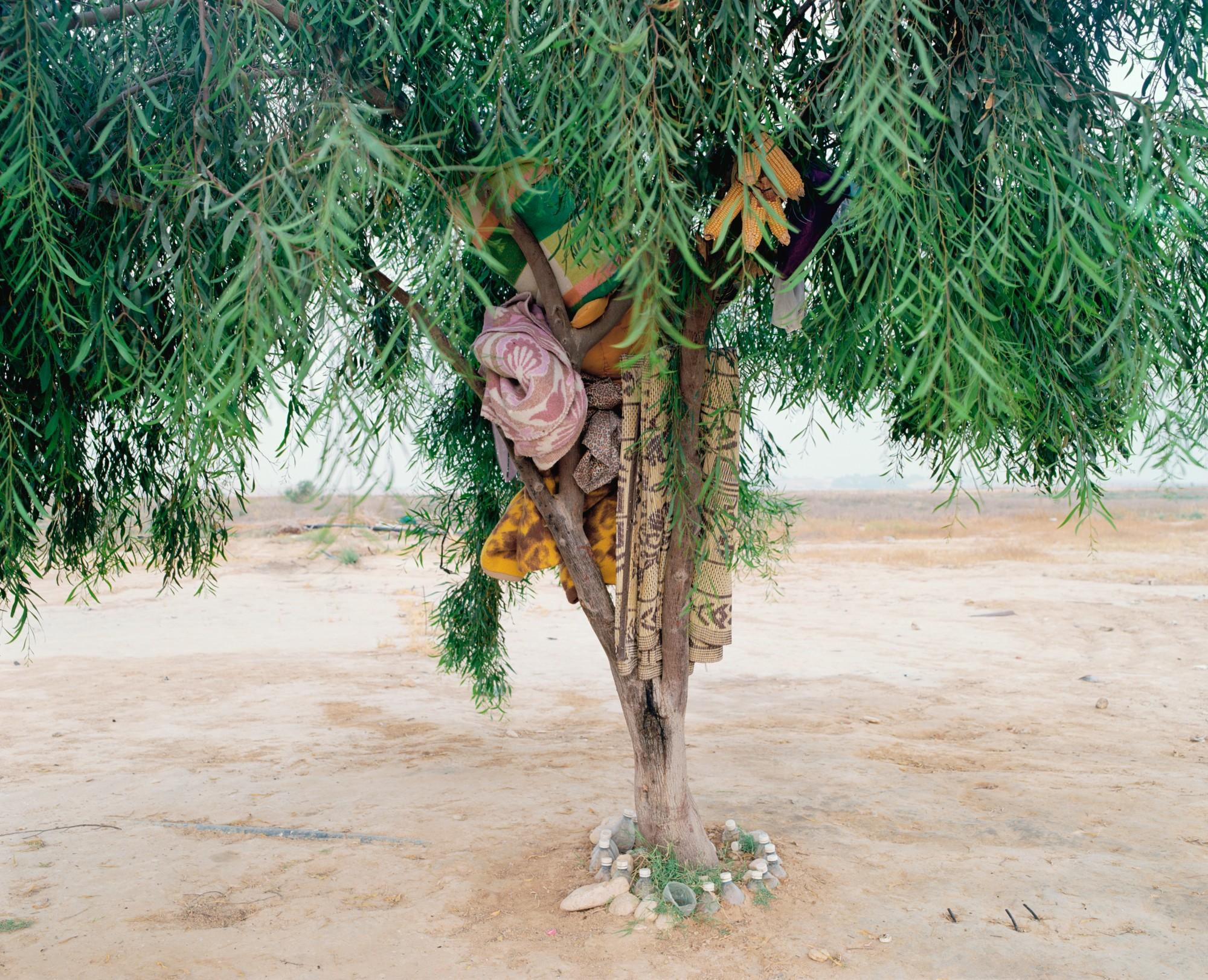 """""""L'arbre de Bisharah et Anwar"""""""