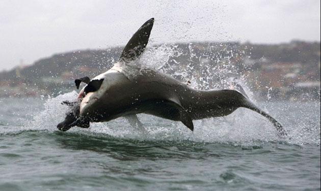 哈佛研究员利用 3D 打印品来解释鲨鱼皮为何有利游泳