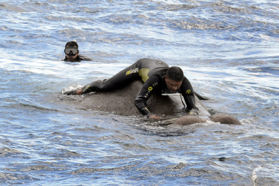 Sri Lanka navy rescues elephant washed out to sea