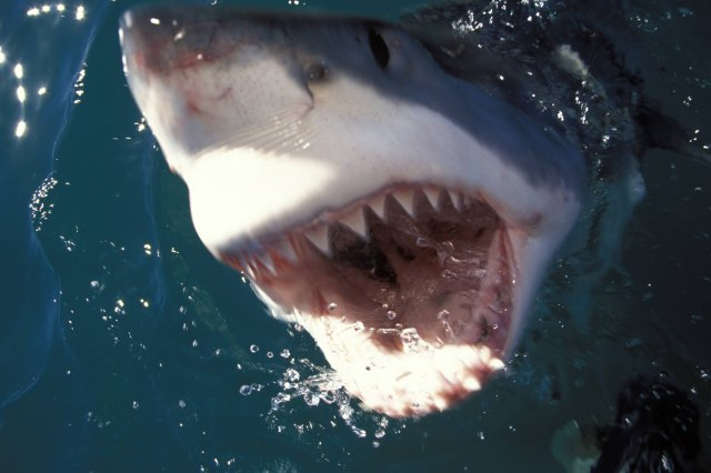 Bodyboarder seriously injured after shark attack in Australia
