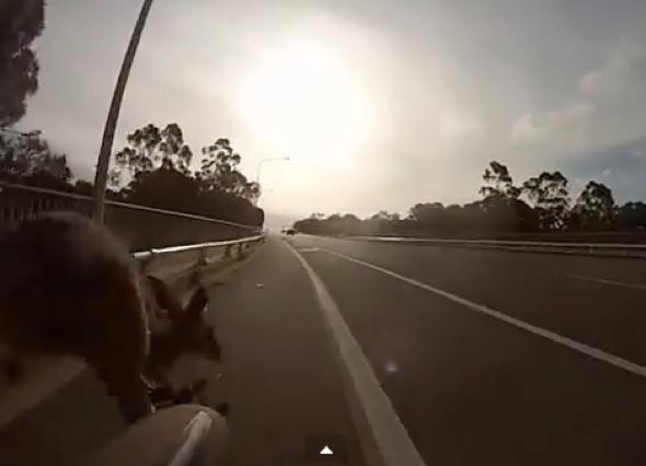 Former Australian cricketer knocked off bike by kangaroo (video)