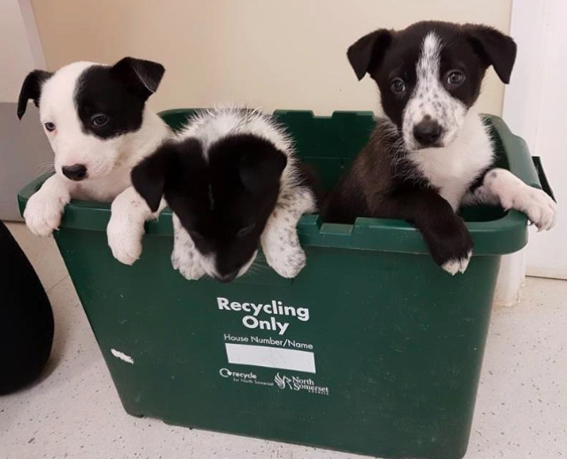 Dog sniffs out three puppies abandoned in the woods