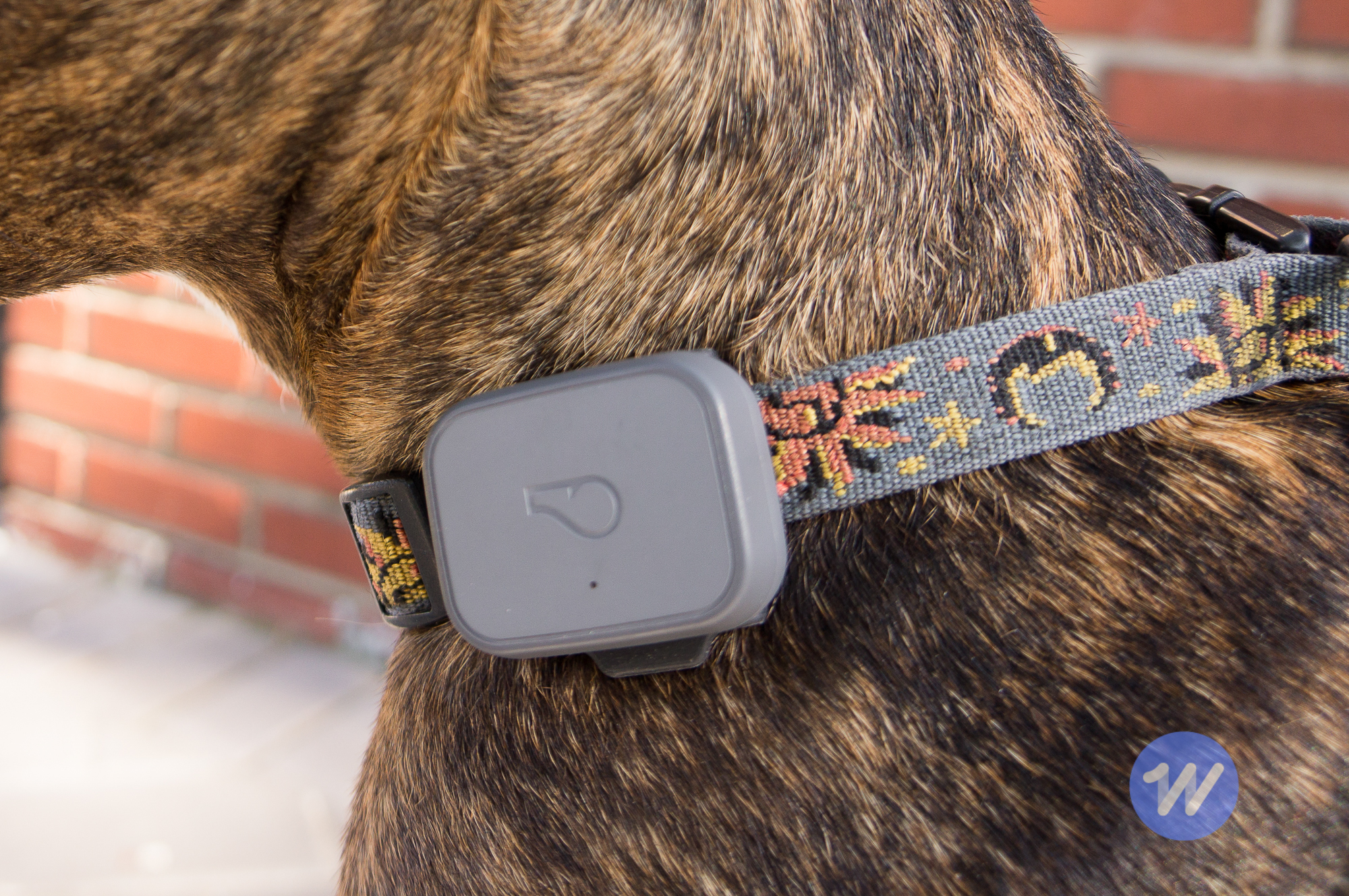 The best GPS trackers for cats and dogs