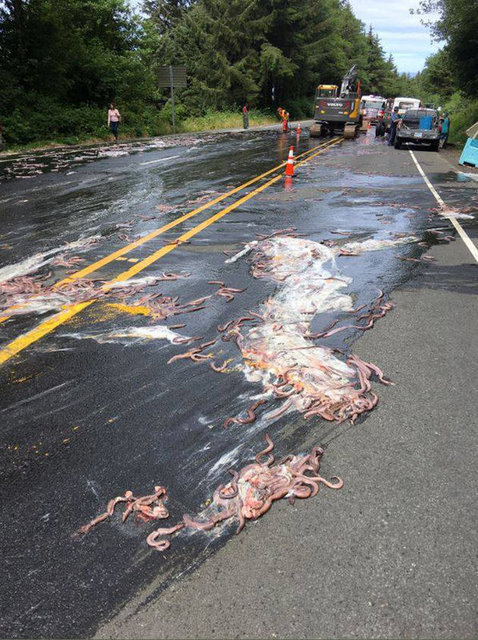 Slime eels, otherwise known as Pacific hagfish, cover Highway 101 after a flatbed truck carrying them live in tanks overturned near Depoe Bay, Oregon, U.S. July 13, 2017.  Depoe Bay Fire District/Handout via REUTERS  ATTENTION EDITORS - THIS IMAGES WAS PROVIDED BY A THIRD PARTY
