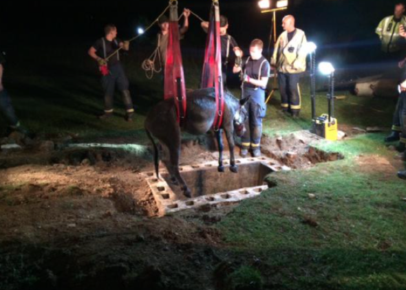 Donkey in five-hour rescue from water-filled storm drain