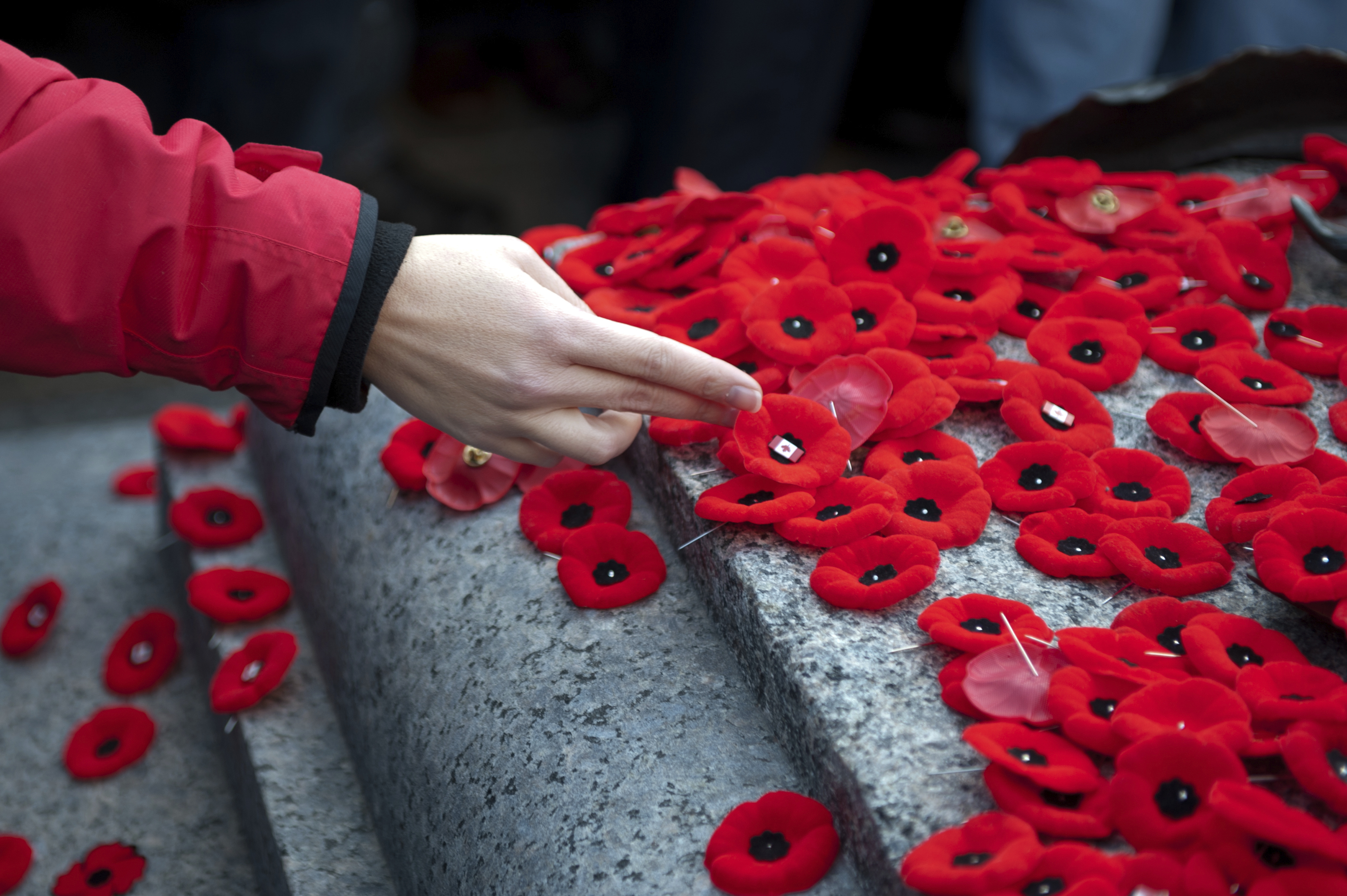 Why We Wear Poppies On Remembrance Day