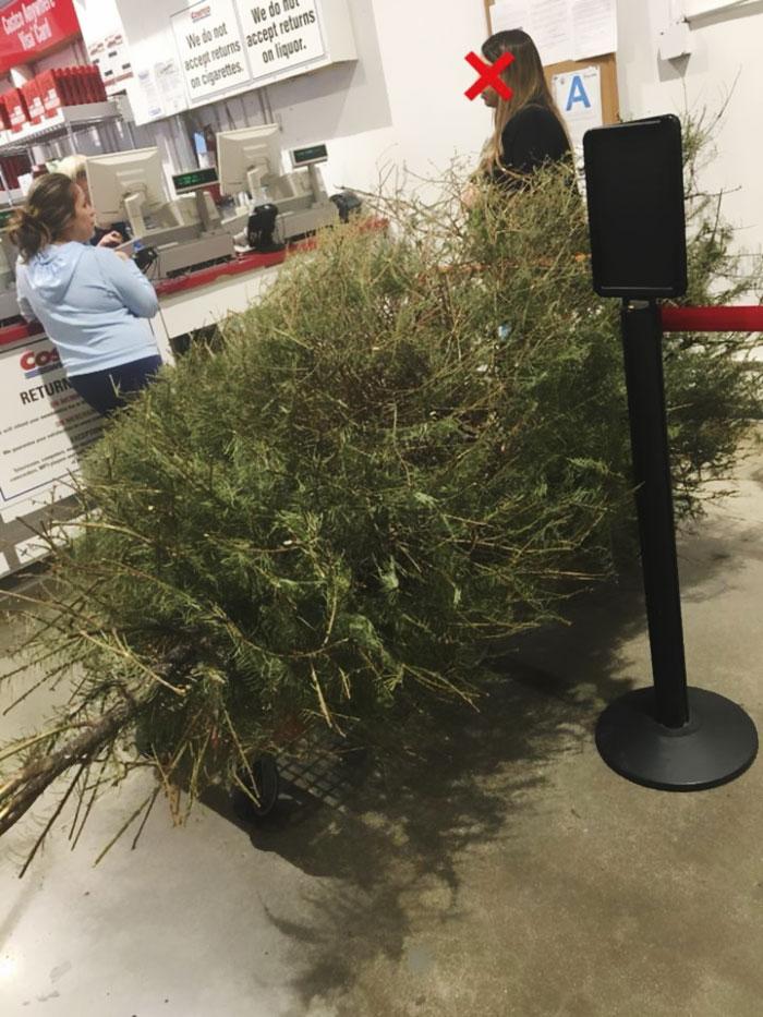 Costco Christmas Tree