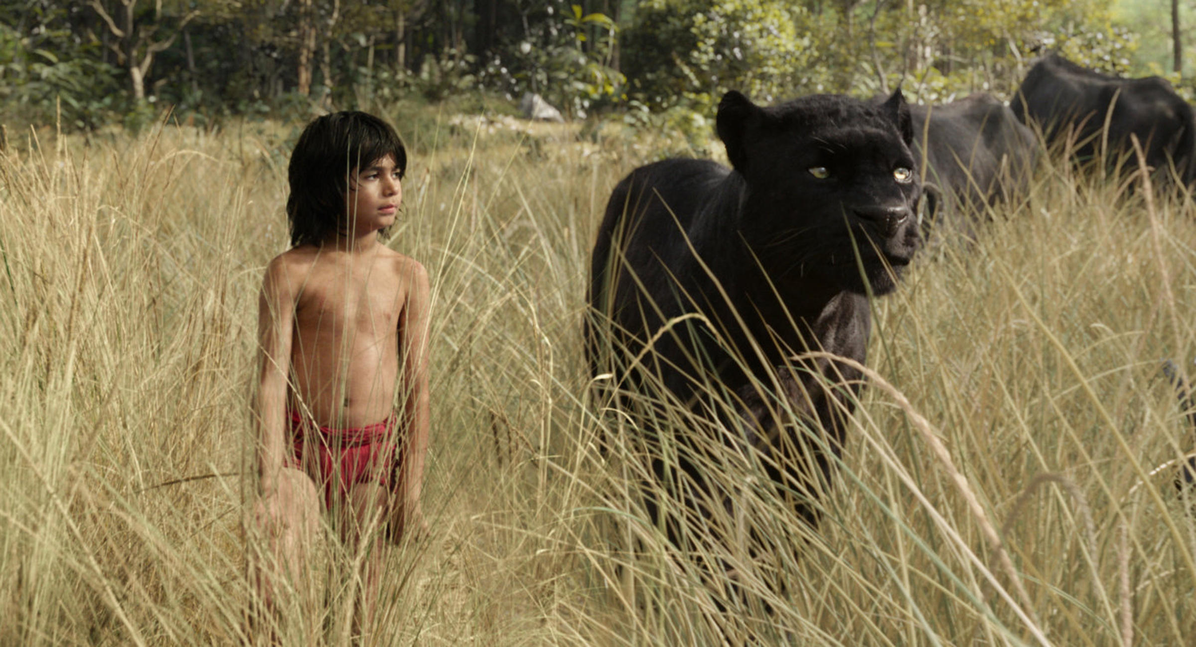 The Jungle Book is an upcoming American 3D comedy-adventure fantasy film directed by Jon Favreau, written by Justin Marks, and p