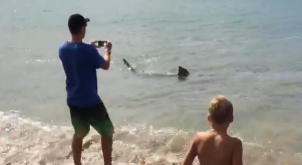 Shark shocks beachgoers in New Zealand (video)