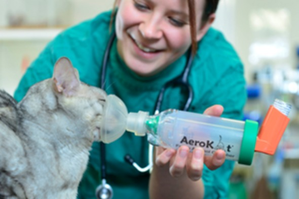 Cat with asthma