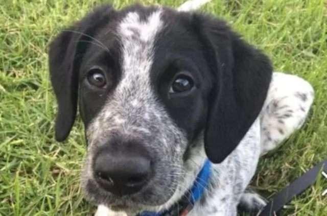 sniffer dog shot dead in New Zealand airport