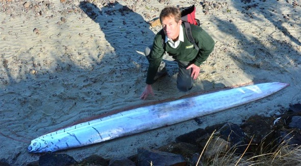 Extremely rare fish washes up on marsh in New Zealand