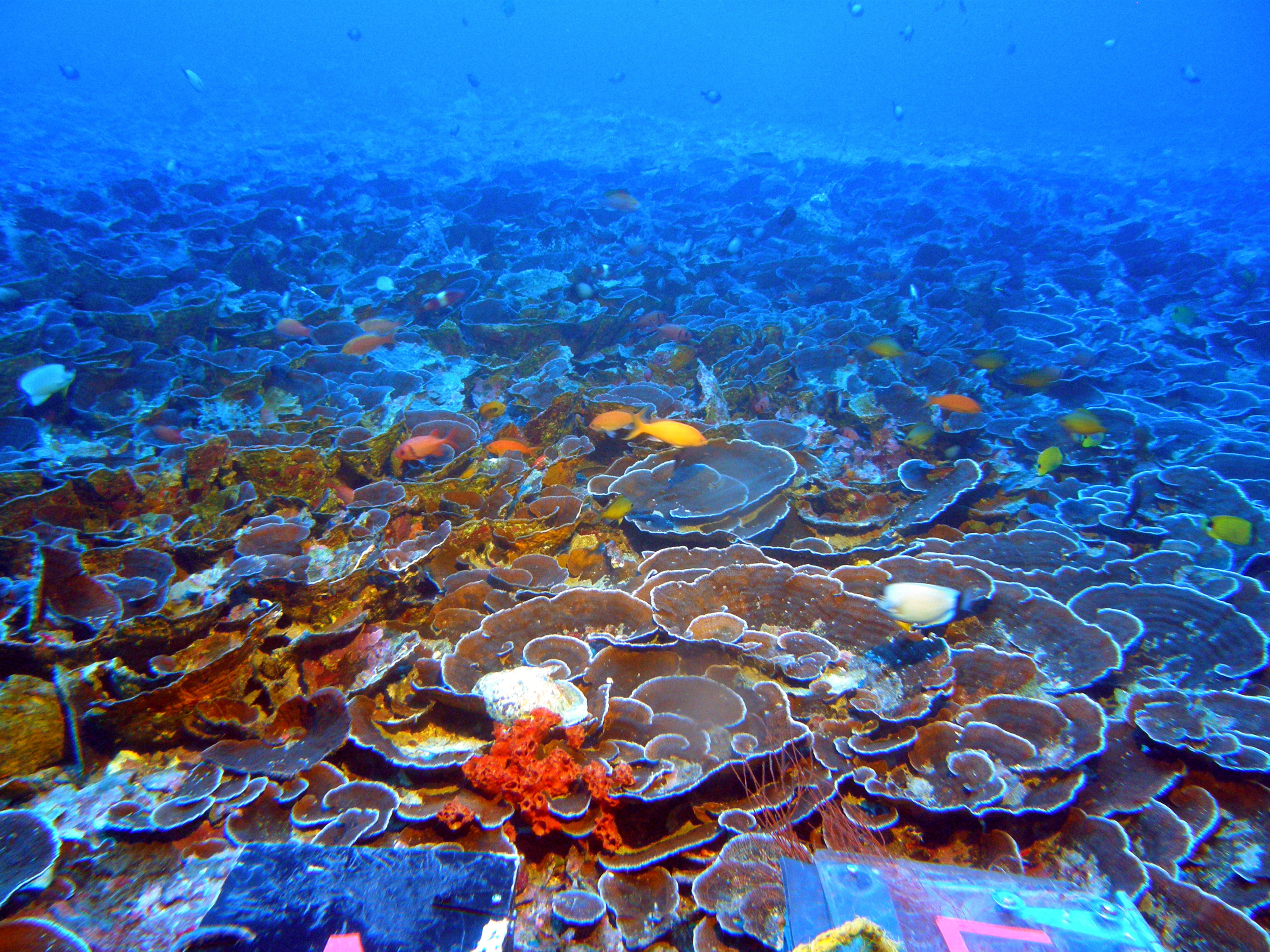 Mesophotic Coral Reefs Could Help Marine Life Survive