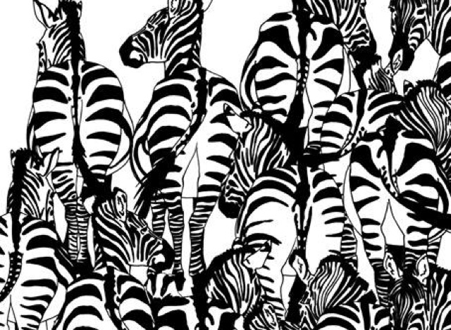 Can you spot the badger hiding in this zebra picture?