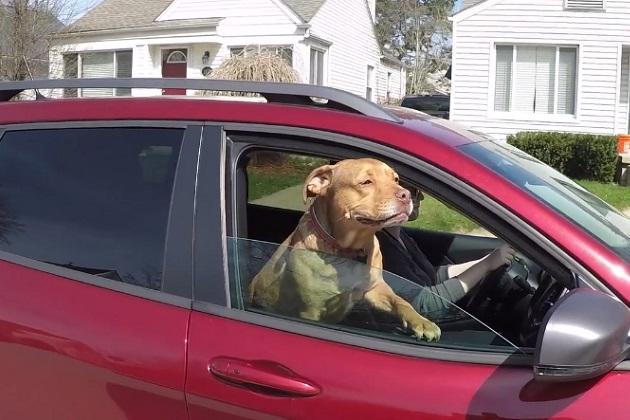 【ビデオ】米Autoblogのマスコット犬ハンク、2014年型ジープ「チェロキー」でドライブ!