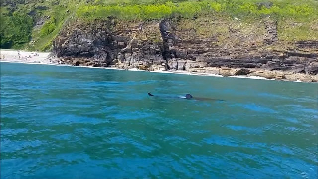 18ft shark shocks swimmers in Cornwall