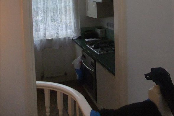 The kitchen of the narrow Hackney house