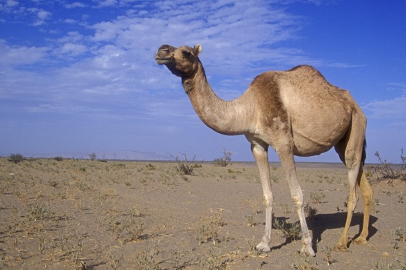 Man killed by camel at Mexico wildlife sanctuary