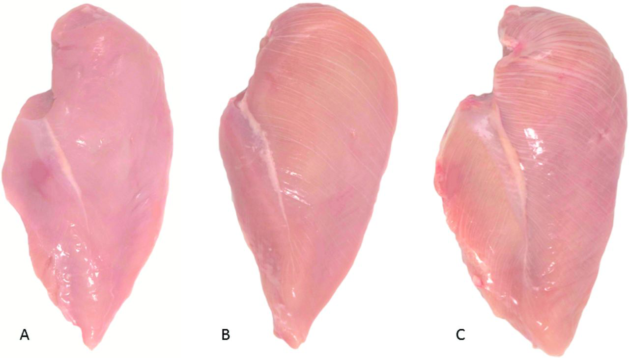 White striping in chicken meat