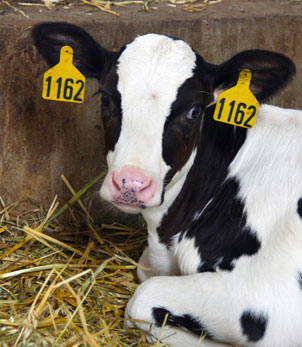 this built america shatto milk company missouri