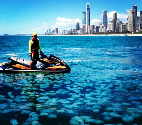50-metre swarm of blue jellyfish invade Australia's Gold Coast