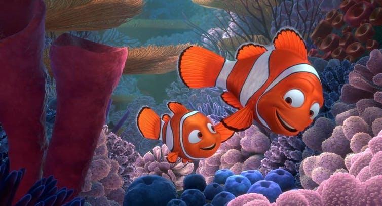 Nemo y su padre muestran sus características tres rayas en Buscando a