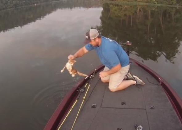 Fishermen save two kittens that swim up to their boat