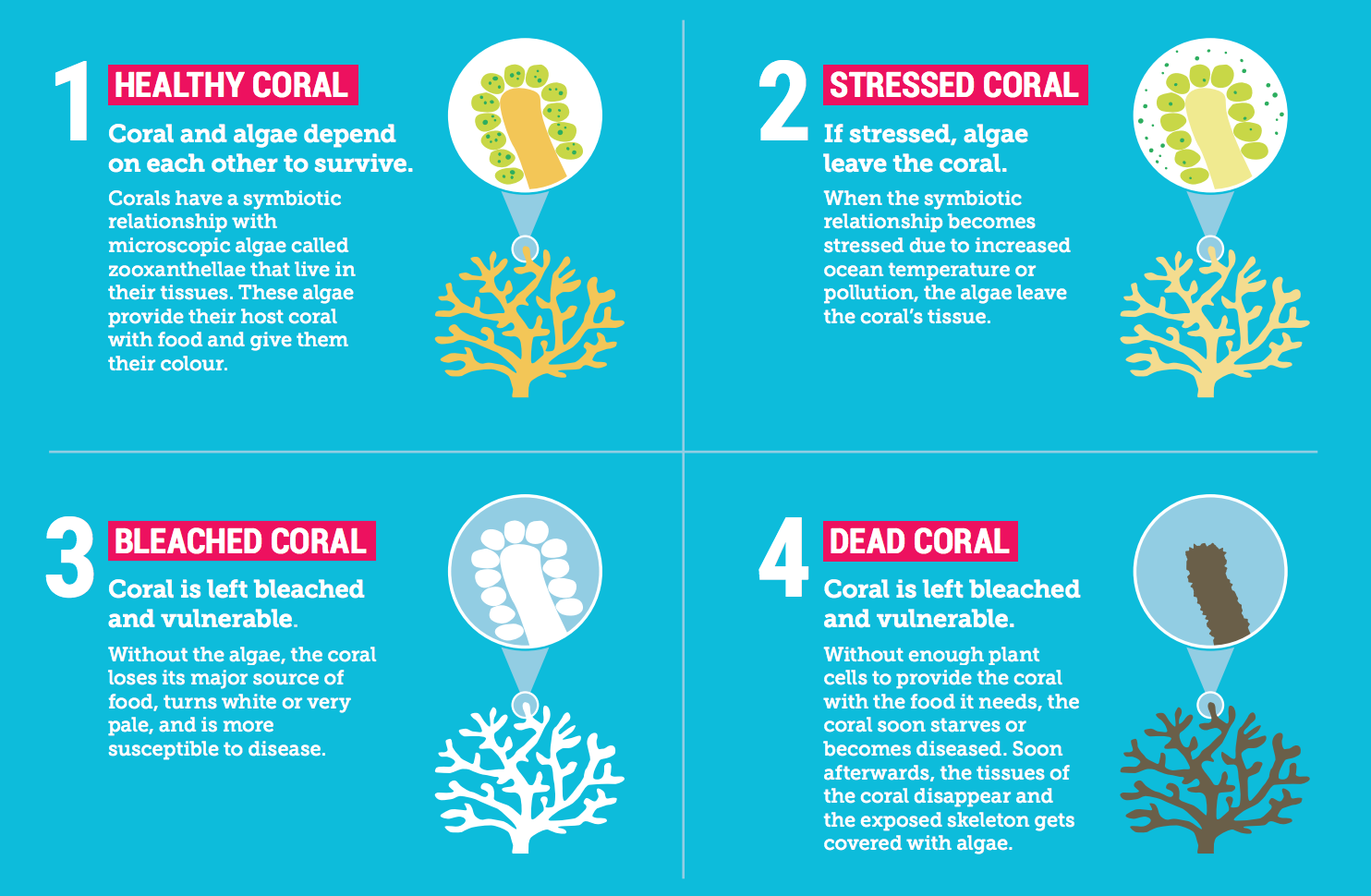 Climate Council Decries Massive Adani Mine As The Great Barrier Reef
