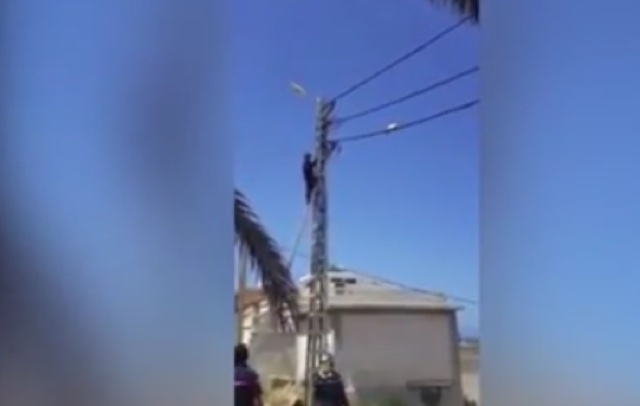 Cat does tightrope walk as firefighters try to rescue it