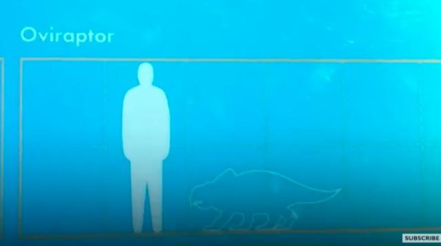 Young boy spots dinosaur error at Natural History Museum