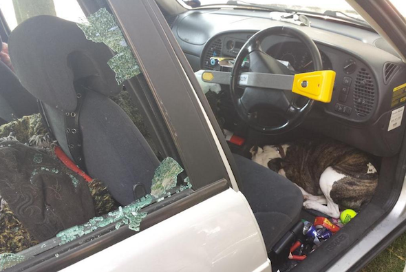 Dog trapped in car