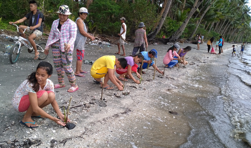 A climate change youth group plants mangrove seedlings on a beach in the