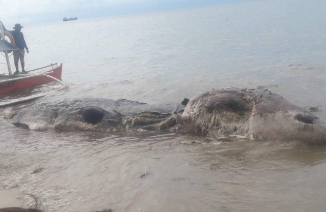 Huge 32ft 'sea creature' washes up on Philippines beach