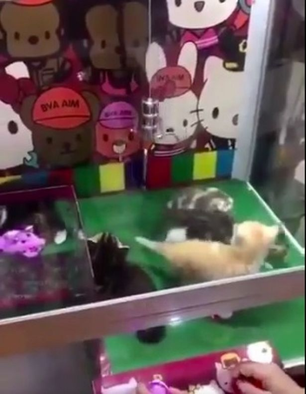 Chinese amusement park uses real kittens as claw-machine prizes