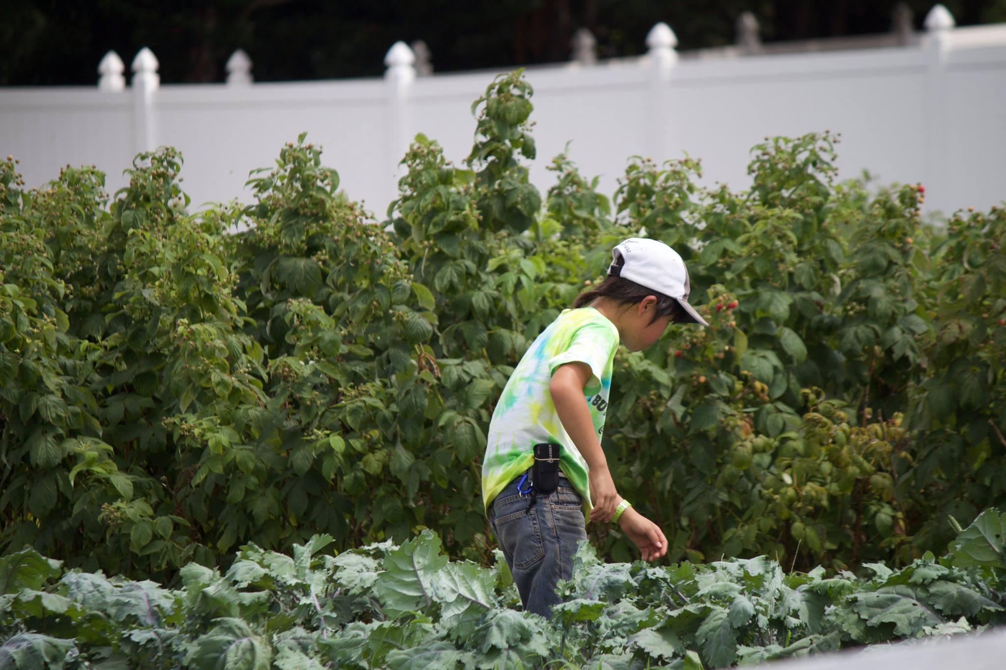 農作業に従事する鷹之介君=アメリカ・マサチューセッツ州のライトロック農場