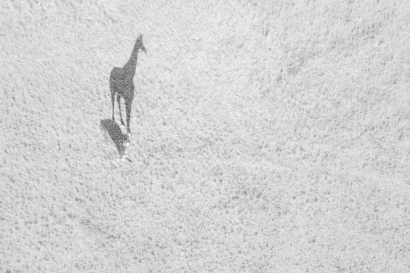 Las mejores fotos aéreas tomadas con drones en 2018