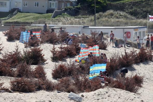 council-remove-christmas-trees-porthtowan-beach-cornwall