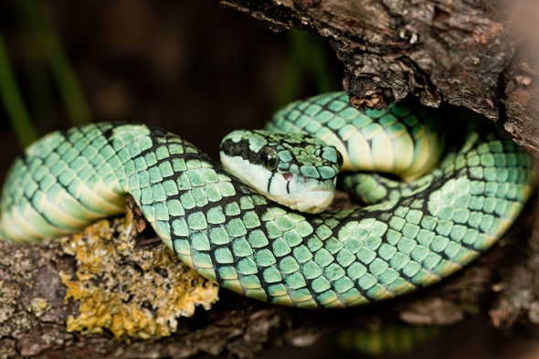 Venomous viper snake escapes enclosure at London Zoo