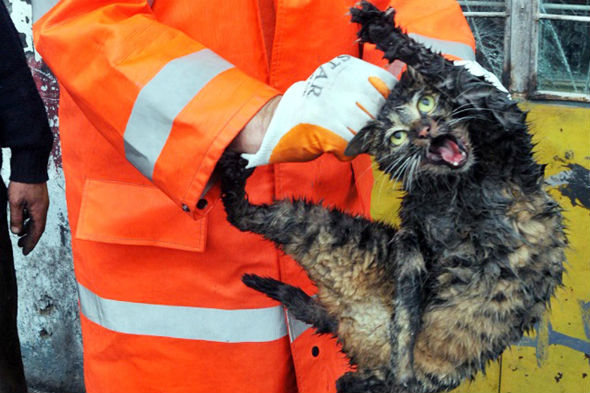 Cat trapped in car engine