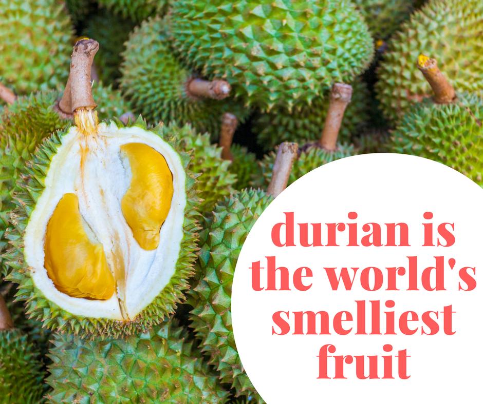 durian world smelliest fruit ever 11 smelliest foods.