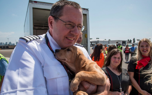 Southwest Airlines rescues 64 animals from Hurricane Harvey devastation