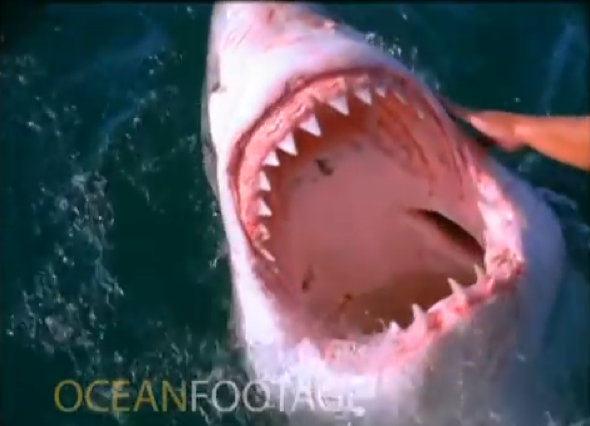Fisherman 'pets' a great white shark in South Africa (video)